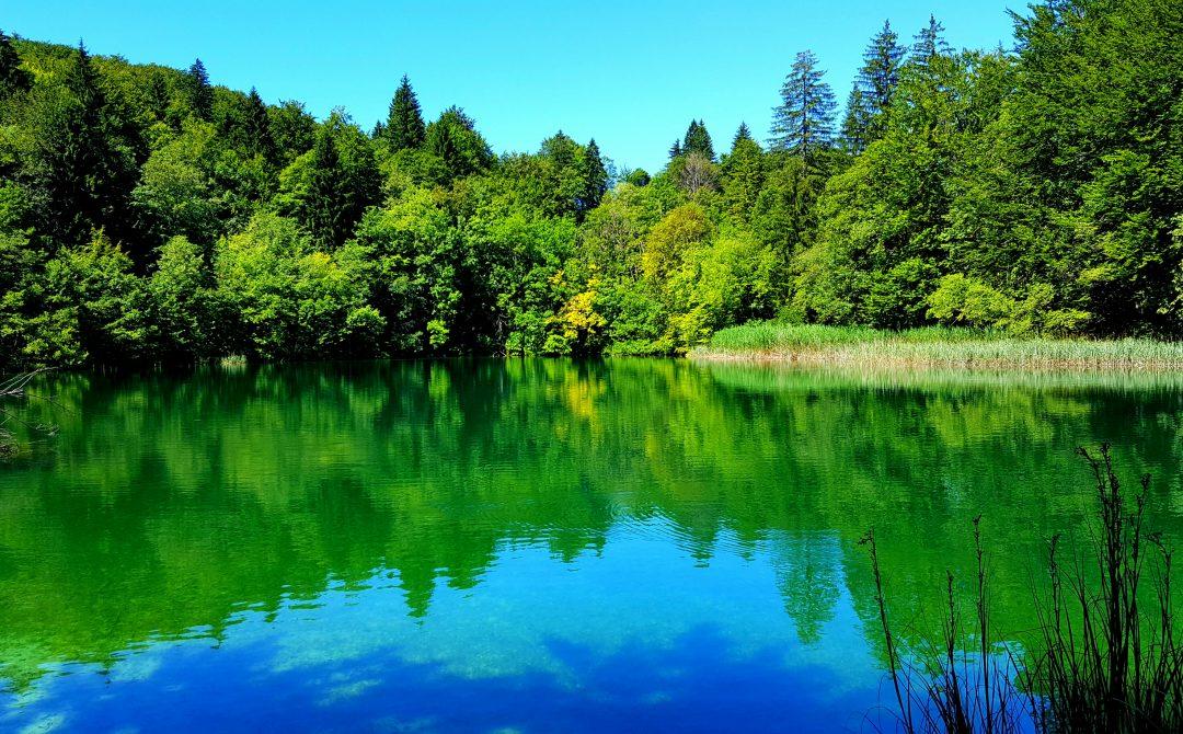 lac, copaci, reflexie