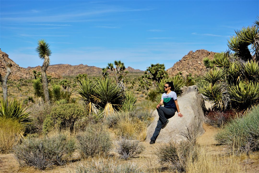 Parcul national joshua tree din california