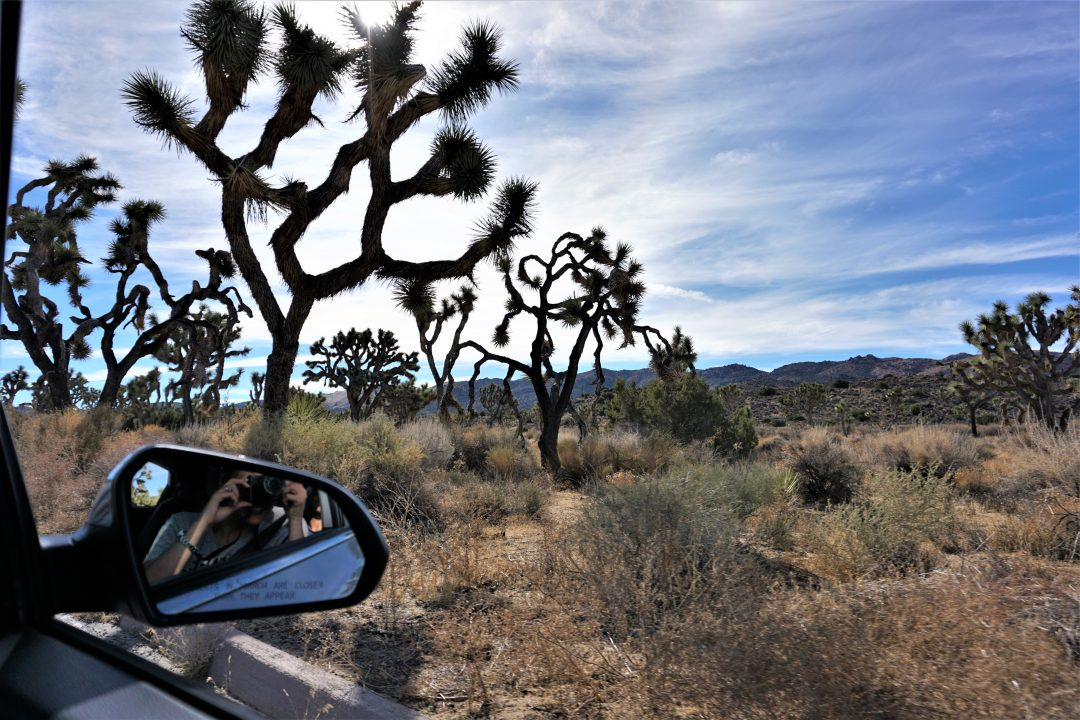 Joshua tree din masina