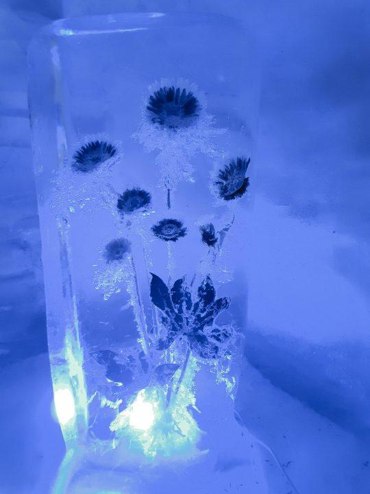 flori in gheata